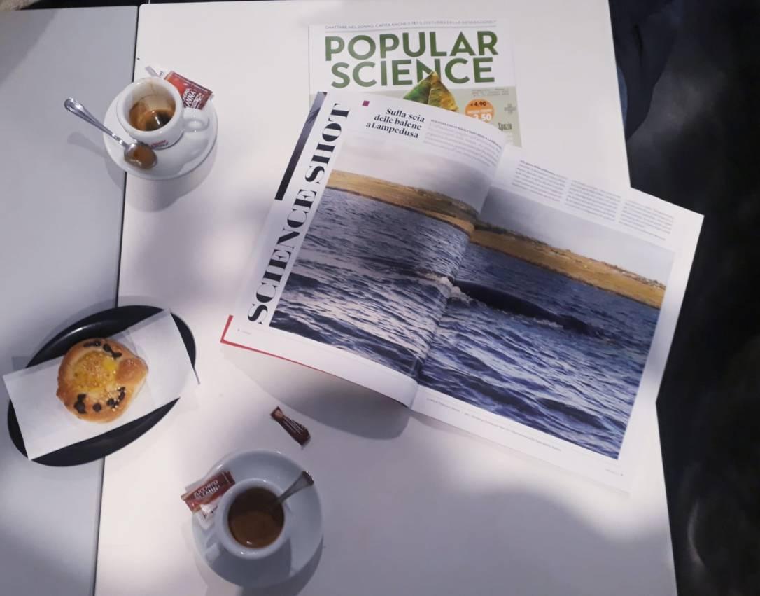 balene in rivista